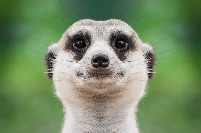 5 Things Every Marketer Needs to Know About the Meerkat App