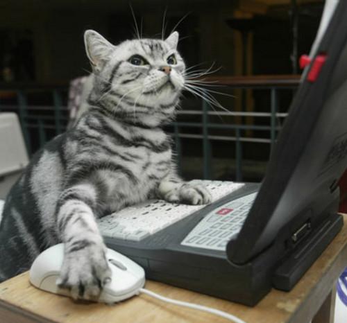 Cat Typing
