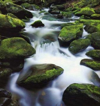stream economy