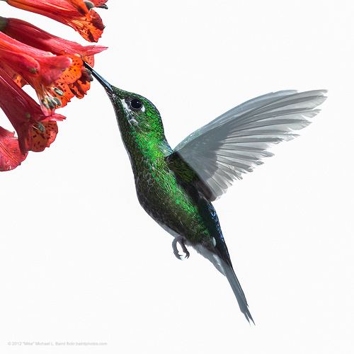 Why the Google Hummingbird Update is a Welcome Change for Consumers