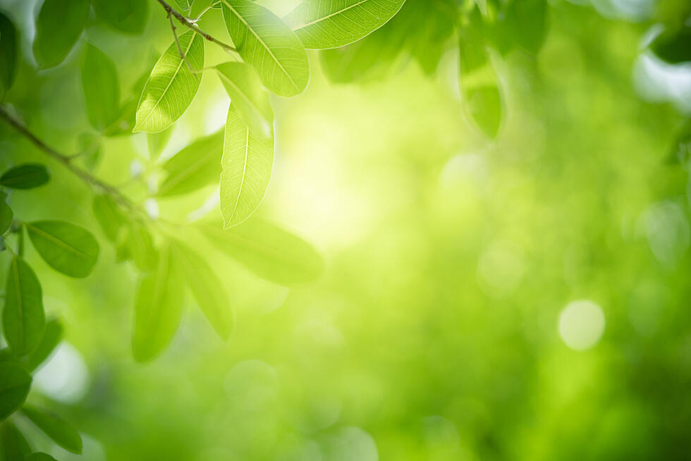 The Psychology of Design: The Color Green
