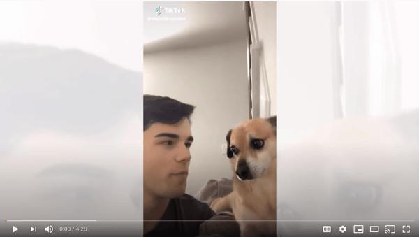 dogs react to tik toks