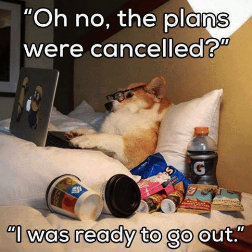 cancelled-plans-corgi